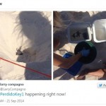 Sea Turtle Hatchlings tweet from @LarryCompagno